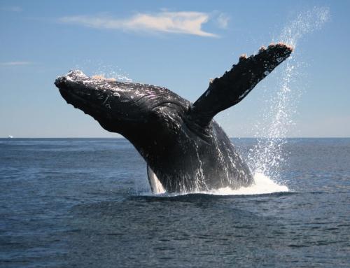 Viaja con las Ballenas en los días Festivos