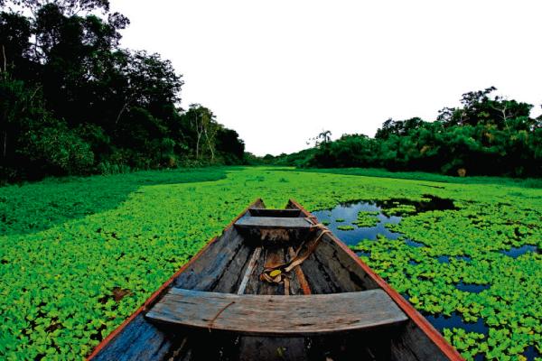 Protegido: Amazonas: Colombia, Perú y Brasil