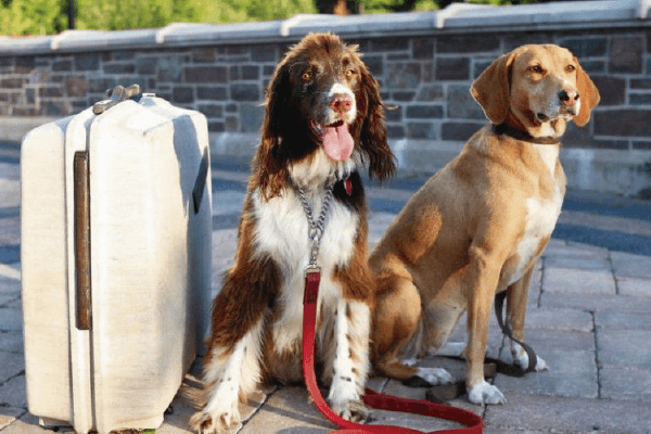Turismo Pet friendly, una tendencia en alza